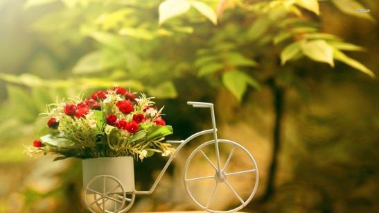 bike-flower-pot-photography-14500
